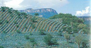 Jalisco Tierra de Tequila