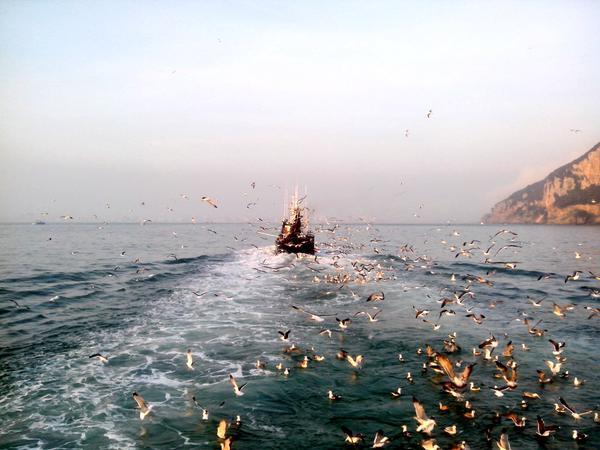 Aves recibiendo a los marineros a su llegada a Santoña vía @IsmaelPerez1