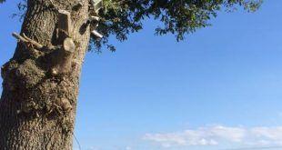 Cámara de Vigilancia en los árboles