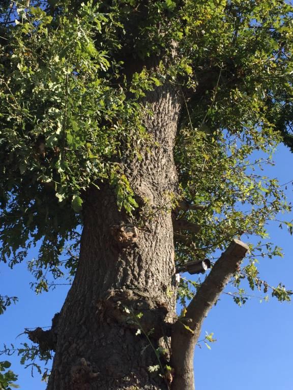 Cámara de Vigilancia en los árboles de Cantabria