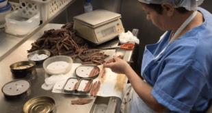 Sobadoras de anchoas del Cantábrico