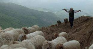 Pastores en la niebla - Domingo Moreno