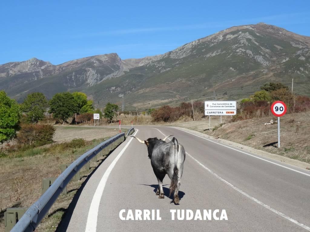 Carril Preferente Cántabro -Vaca Tudanca - David Bestia Parda