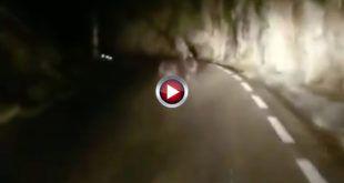 Video - Se encuentran un par de osos en una carretera de Cantabria