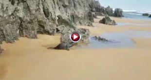 video La foca de Ajo Cantabria - GonzaloYAlicia