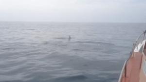 Navegando junto a delfines en Cantabria