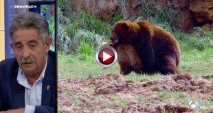 video El oso Furaco y Revilla en El Hormiguero