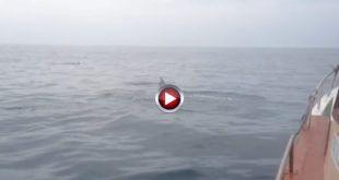 video Navegando junto a delfines en Cantabria
