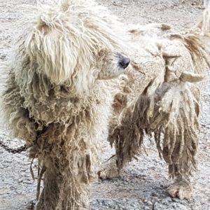 Perro abandonado en Escalante (Cantabria)