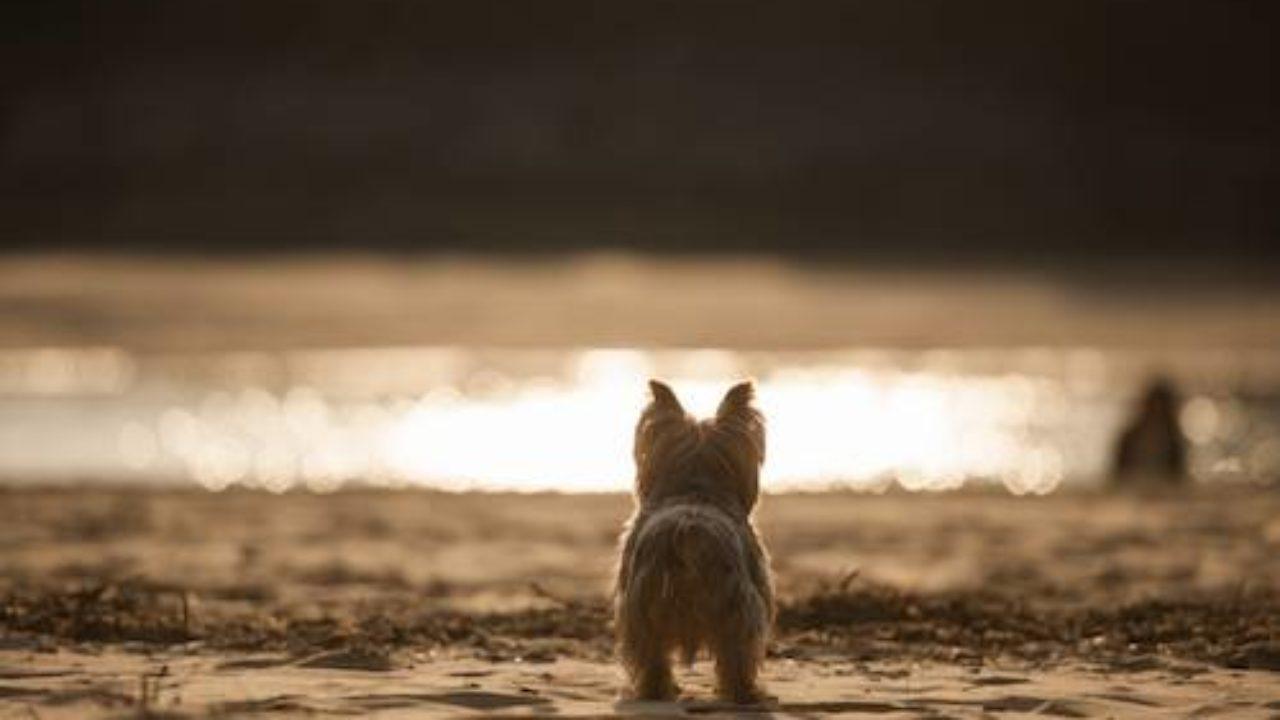 Playas Para Perros En Cantabria 2020
